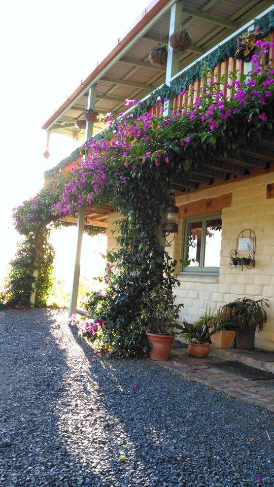 house bougainvillea